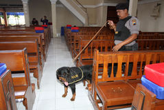 Sniffer dogs Stock Image