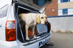 Snifferhund Royaltyfri Fotografi