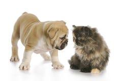 Sniffing do filhote de cachorro e do gatinho fotos de stock royalty free