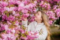 Sniffing flowers. Child enjoy warm spring. Girl enjoying floral aroma. Kid on pink flowers of sakura tree background. Botany concept. Kid enjoying cherry stock images