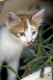 Sniffing the grass! Stock Image