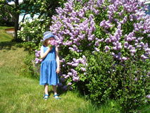 Sniffing lilacs blur Royalty Free Stock Images