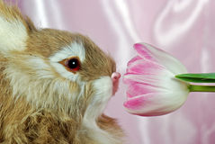 Sniffing Spring Royalty Free Stock Photography