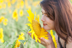 Sniffing sunflowers Stock Photo