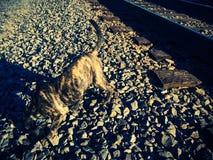 Sniffinstenen Stock Foto's