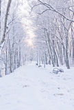 Snöig bana i vinter Royaltyfria Bilder