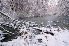 Snöig Forest Scenery Illinois Royaltyfri Foto