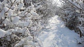 Snöig fruktträdgård Royaltyfria Foton