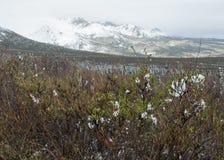 Snöig landskap i Alaska Royaltyfria Foton