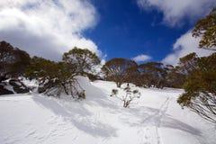 Snöig vinterlandskap Royaltyfri Foto