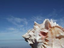 Snigel och himmel Royaltyfri Foto