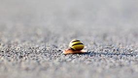 Snigel på asfalten lager videofilmer
