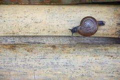 Snigel på bambutrottoaren Royaltyfri Foto