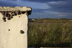 Snigel på en vägg i den Bunbeg stranden arkivbilder