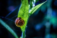 Snigel på en växt royaltyfri fotografi