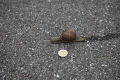 Snigel på jordningen med 1 euromynt arkivfoton
