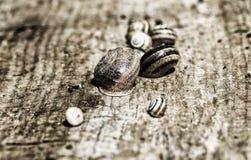 Snigel på stranden Arkivfoton