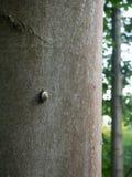 Snigel på trädstammen Royaltyfri Fotografi