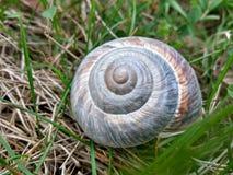 Snigel Shell i ett grönt fält royaltyfri foto