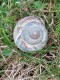 Snigel Shell i ett grönt fält arkivbild