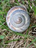 Snigel Shell i ett grönt fält royaltyfri bild