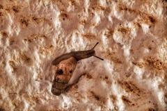 Snigel som går på den smutsiga väggen royaltyfri fotografi