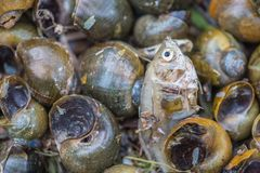 snigelkadaver och dödfisk Royaltyfri Fotografi