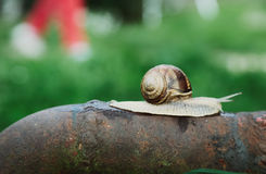 Snigeln går Fotografering för Bildbyråer