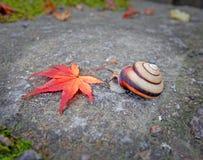 Snigeln och det röda bladet vaggar på bakgrund arkivfoton