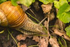 SnigelShell Horns Nature Sunny dag royaltyfria bilder