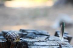 Snigelskal över en gammal trädstubbe i skogen Arkivbilder
