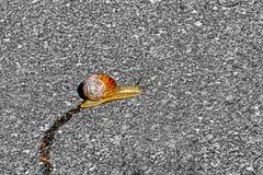Snigelslinga på asfalt, enkel snigel arkivbilder