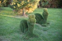 Sniglar från buskarna royaltyfria foton