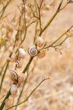 Sniglar på en växt Royaltyfria Foton