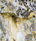Sniglar på stenDevetakskoy grottor i Bulgarien Arkivfoton