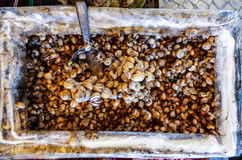 Sniglar som är till salu på en gatamarknad Royaltyfri Foto