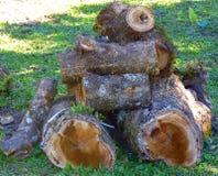 Snijd boomstammen af Stock Foto