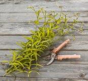 Snijd de stammen van lelies aan het eind van het seizoen royalty-vrije stock foto