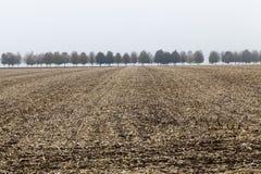 Snijd de stelen van graan in de herfst royalty-vrije stock afbeeldingen