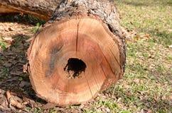 Snijd een boom Stock Foto's