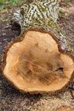 Snijd een boomboomstam liggend op de grond royalty-vrije stock afbeelding