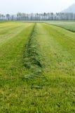 Snijd en harkte vers grasweide met lange symmetrische hopen van vers groen gras stock afbeeldingen