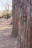Snijd hart op de boom stock fotografie
