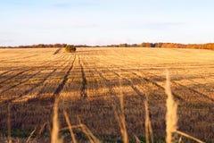 Snijd onlangs het gebied van de de herfsttarwe in een dorp in Moldavië royalty-vrije stock foto