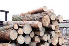 Snijd in openlucht de logboeken vers van de boompijnboom bij de winterdaglicht royalty-vrije stock afbeelding
