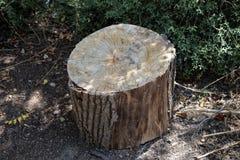 Snijd vers boom het programma opent tuin stock afbeelding