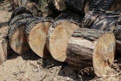 Snijd vers boom het programma opent tuin stock foto's
