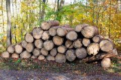 Snijd vers boomlogboeken dichtbij een bosweg omhoog worden opgestapeld die stock foto