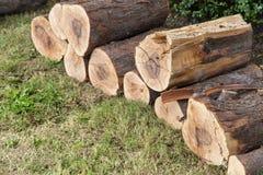 Snijd vers de logboeken van het pijnboomhout stock afbeeldingen