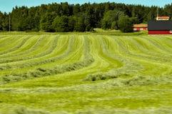 Snijd vers gras in lijnen stock afbeeldingen